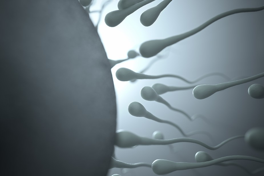 "Otkriveno kako jajna ćelija ""hvata"" spermatozoide"