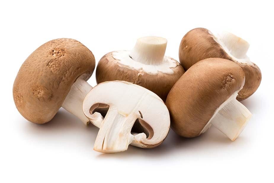 Pečurke (gljive) - braon šampinjoni